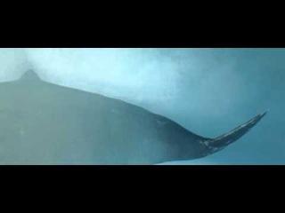 Автостопом по галактике. Эпизод с падающим китом