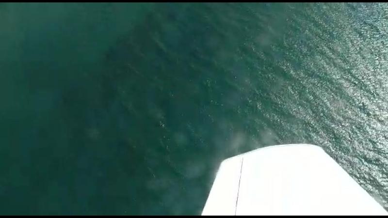 Веселовка море дельфины и т д