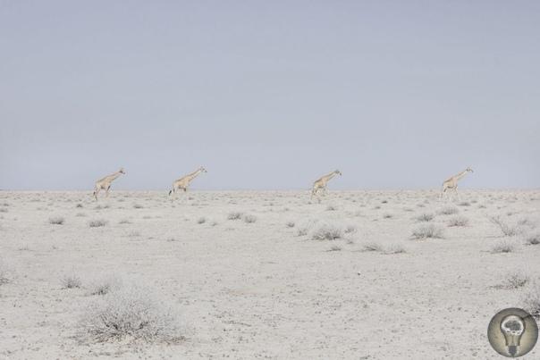 Место, где ничего нет: пустыня Намиб в фотографиях бельгийки Марушки Лавин Тишина и умиротворение бельгийский фотограф Марушка Лавин запечатлела просторы самого малонаселенного места Земли