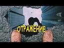 РОНДО - Отражение (1986)