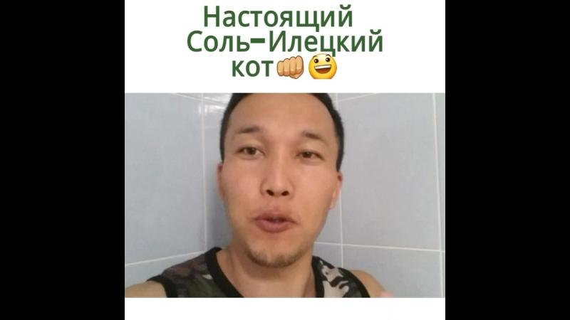 Соль Илецкий кот