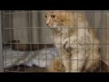Лео - кот-убийца