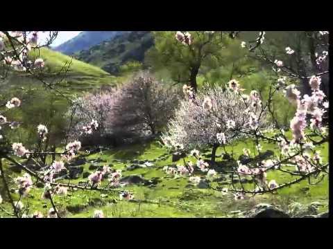 Весна в Алма-Ата и в горах Тянь-Шаня