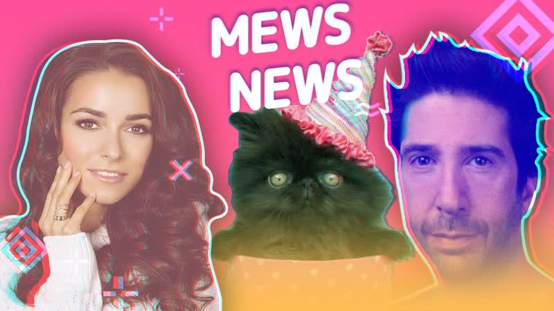 Mews News: День кошачьего единства