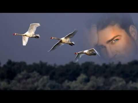 Ты от меня далека!..Рустам Бадалов!Отличная песня и музыка!!