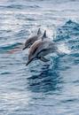 Известны случаи, когда дельфины спасли людей с затонувших кораблей.