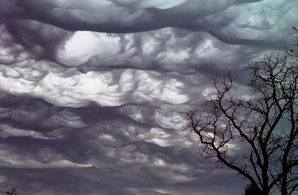 Асператус самые страшные облака Облака Undulatus asperatus (в переводе с лат. волнисто-бугристые) достаточно редкий вид облачных образований. Этот вид облаков, на настоящее время являющийся