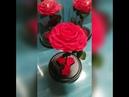 Живые вечные розы в колбе