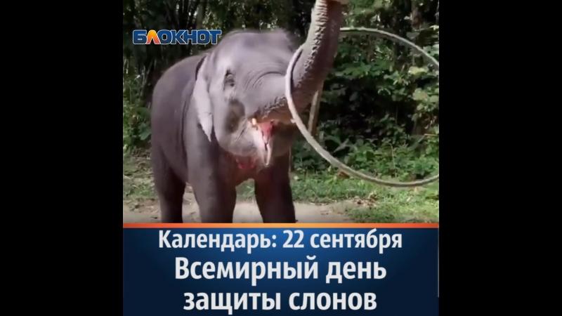 Календарь 22 сентября Всемирный день защиты слонов