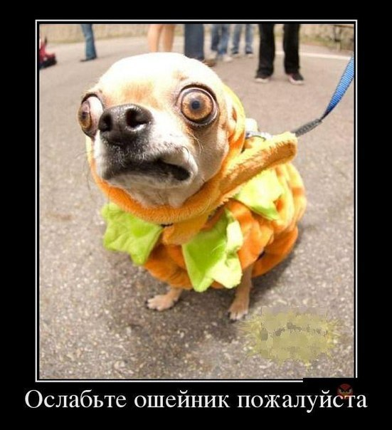 http://cs616231.vk.me/v616231607/13a62/7Ors_uaOoic.jpg