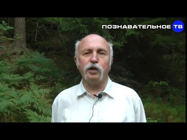 Система создания будущего Производство идиотов (Познавательное ТВ, Михаил Величко)