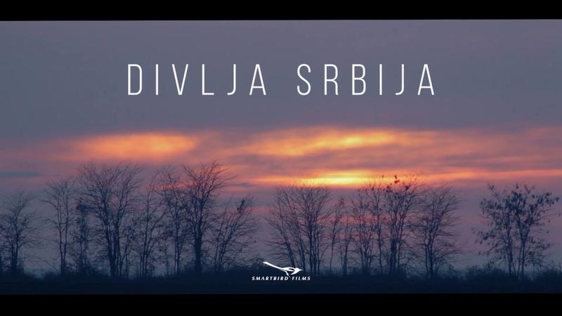 DIVLJA SRBIJA - teaser