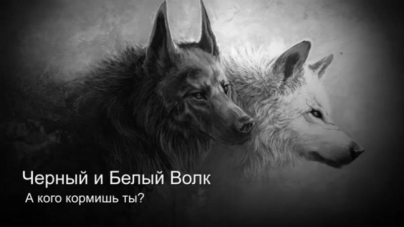 Белый и чёрный Волк