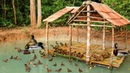 Building Swimming Pool For Baby Ducks And Build Hut For Baby Ducks Staying