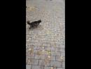 Деловой котяра