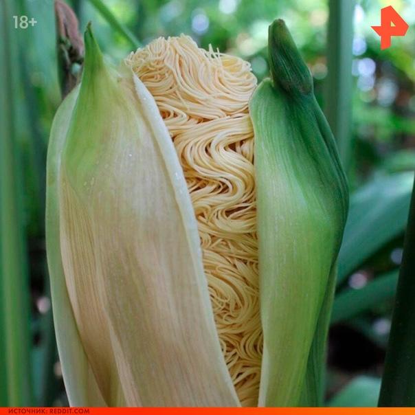 Ученые называют это растение карлюдовика пальмовидная (Carludovica Palmata).