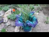 Кашпо-цветок из цемента для сада или дачи.mp4