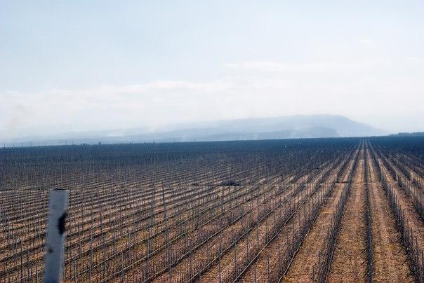 виноградники в КБР ранней весной