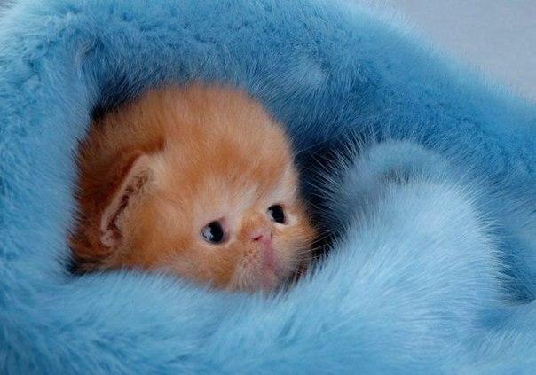 Маленькие котята очень любят играть в