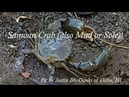 How Can You Tell When A Mud Crab Is Eating Your Bait