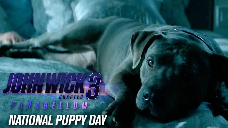 """John Wick Chapter 3 - Parabellum (2019 Movie) """"Happy National Puppy Day"""" - Keanu Reeves"""