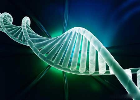 ДНК - это химическая цепь, которая существует в форме двойной спирали.