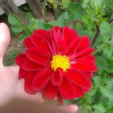 Цветы у Ликки 9XYdRR9v-54