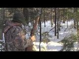 Основной инстинкт: Охота на медведя-шатуна (245)