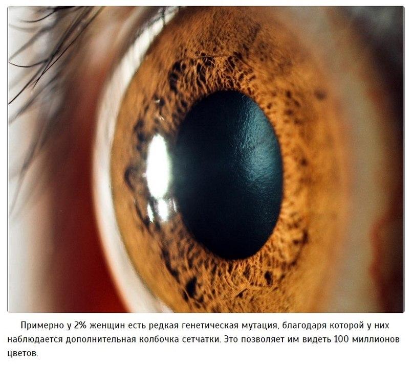 Несколько интересных фактов о глазах, которые вас поразят