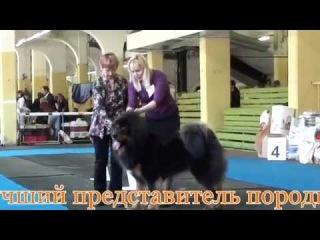 13.04.2014 выставка собак