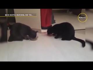 Без кота - жизнь не та Самые лучшие пр... кошками (720p).mp4