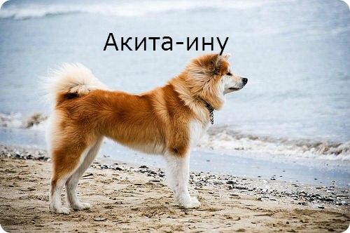 Книга Про Собаку