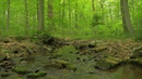 90 Minutes of Woodland Ambiance Nature Sounds Series 9 Trickling Stream Bird Sounds