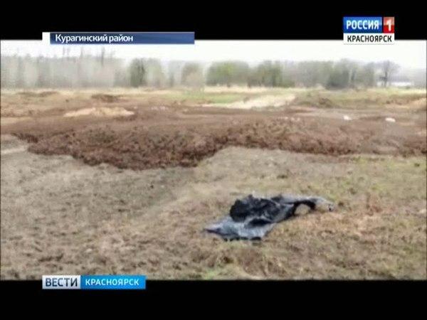 В Курагинском районе местные жители обнаружили огромный скотомогильник смотреть онлайн без регистрации