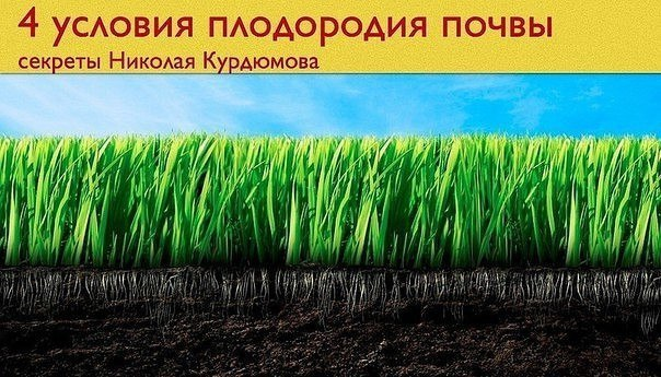 4 условия плодородия почвы. Секреты Николая Курдюмова