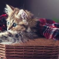 люблю котэ