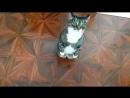 кошкабориска Учу вставать на задние лапки