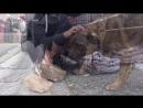 Очень трогательное видео о спасении бездомной собаки.