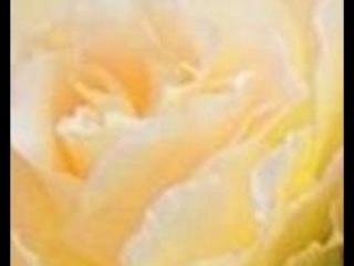Gardenia  ��������