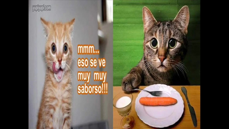 Gatos chistosos Funny cats
