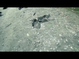 «Инопланетное похищение» (2014): Фрагмент / Официальная страница http://vk.com/kinopoisk