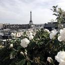 Люди выращивают в одном саду пять тысяч роз. И не находят того, что ищут. А ведь то…