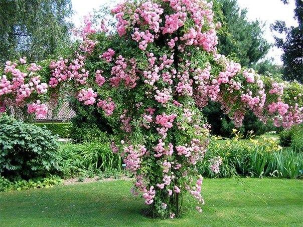 многолетние цветы для дачи фото название
