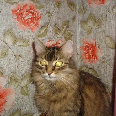 Ксюша Тетерина, 7 августа 1999, Пермь, id220276356