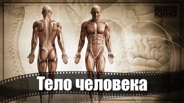 Очень необычный и увлекательный рассказ о том, как в действительности функционирует организм человека.