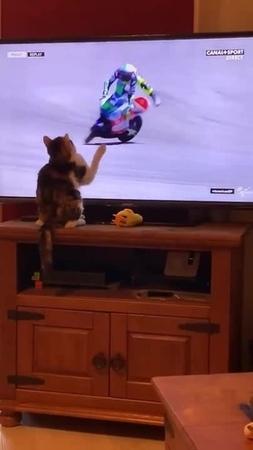 Evil cat vs Moto GP