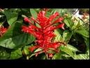 Экзотические растения красивые деревья цветущие кустарники Испании 08 09 2018