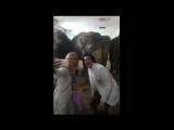 Мишель Фам и Катя - Кормим Слоников В Цирке на ФОнтанке 27 мая 2018