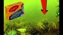 Реакция рыбы на БУЛЬОННЫЕ КУБИКИ Подводная съемка