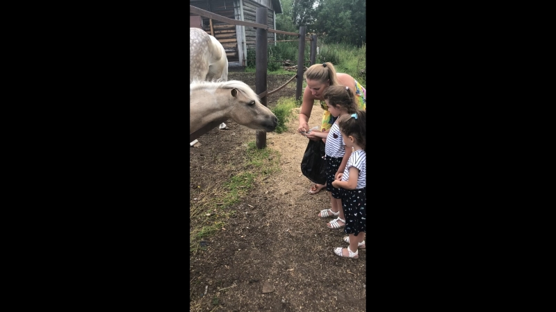 кормимлошадей пони 🦄🐴🐎💕💗💖